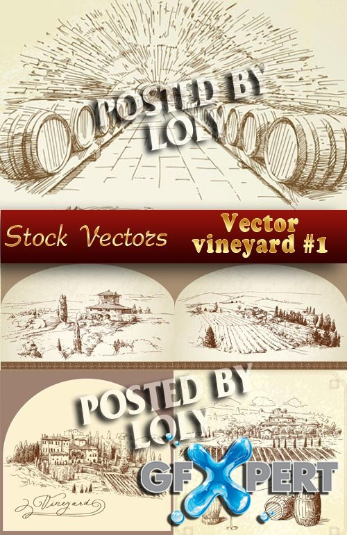 Vector vineyard - Stock Vector