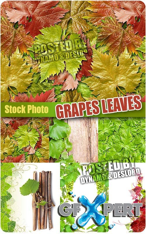 Grapes Leaves - UHQ Stock Photo