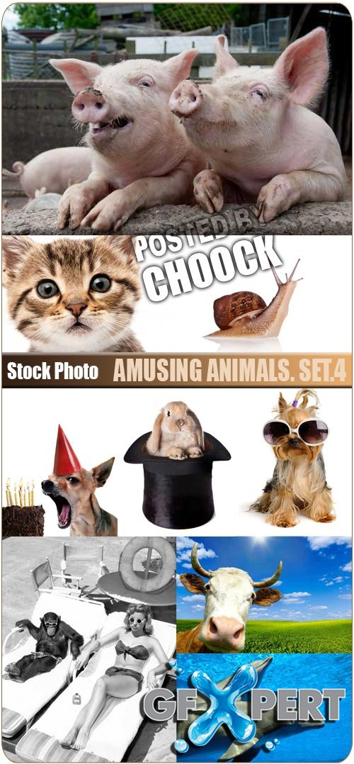 Amusing animals. Set.4 - Stock Photo