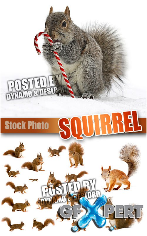 Squirrel - UHQ Stock Photo