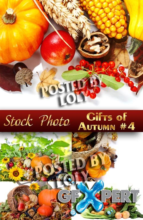 Gifts of Autumn #4 - Stock Photo