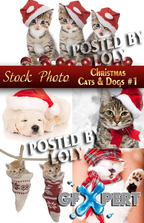 Cat and dog in Christmas hats #1 - Stock Photo