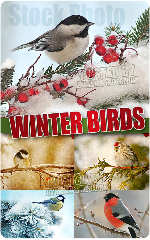 Winter birds - UHQ Stock Photo