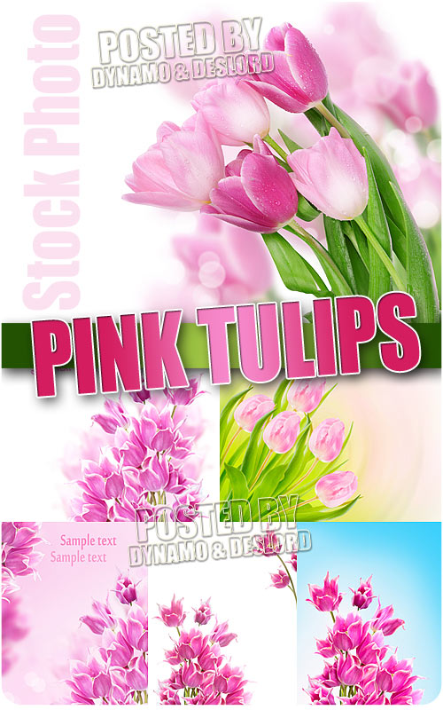 Pink Tulips - UHQ Stock Photo
