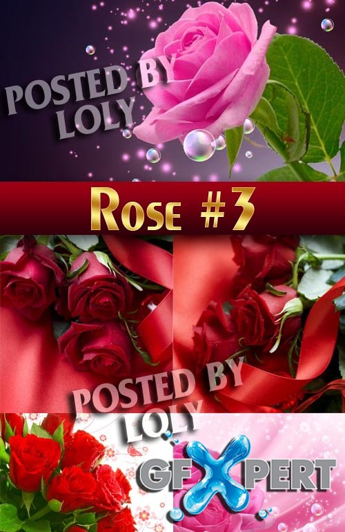 Beautiful Roses # 3 - Stock Photo