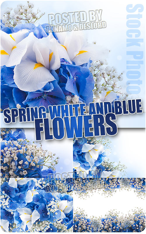 Spring white and blue flowers - UHQ Stock Photo