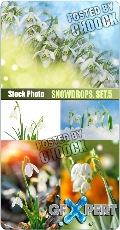 Snowdrops. Set.5 - Stock Photo