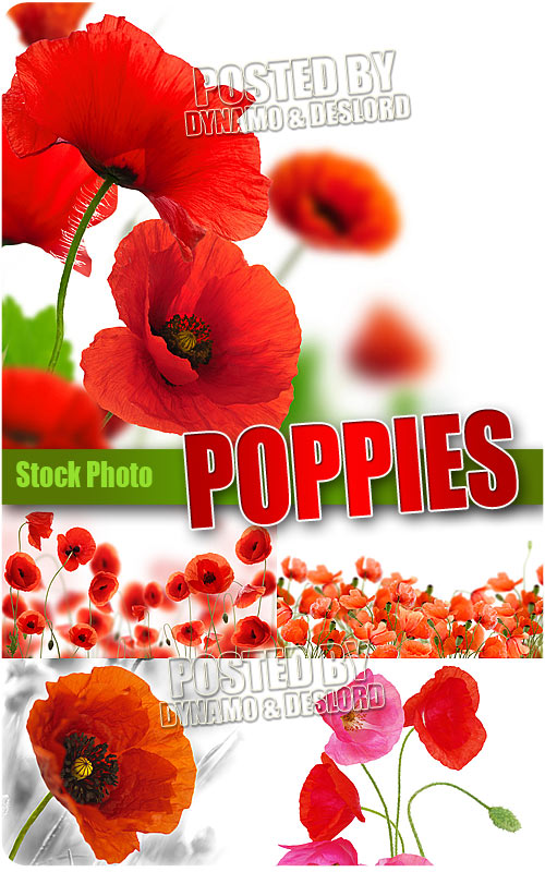 Poppies - UHQ Stock Photo