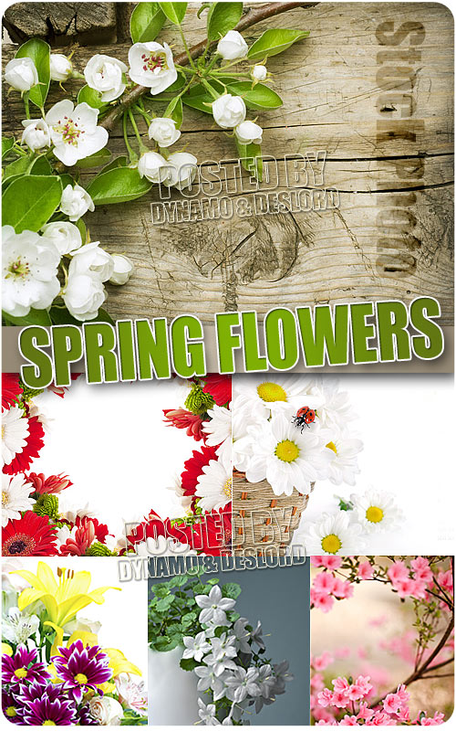 Spring Flowers 7 - UHQ Stock Photo