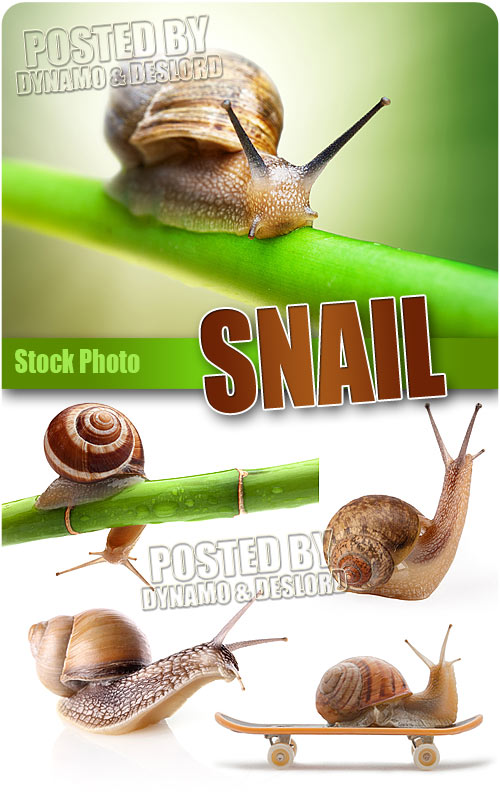 Snail - HQ Stock Photo