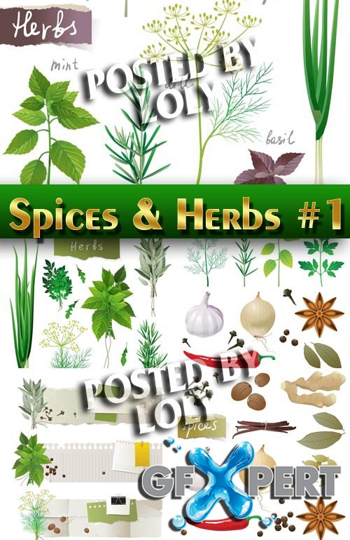 Spices and Herbs #1 - Stock Vector