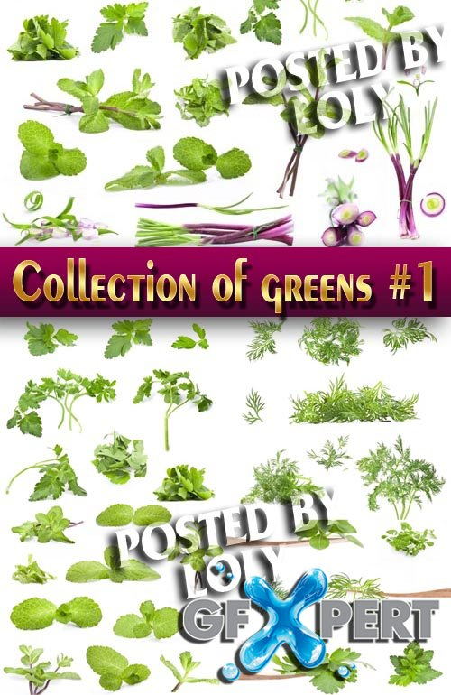 Food. Mega Collection. Herbs #1 - Stock Photo