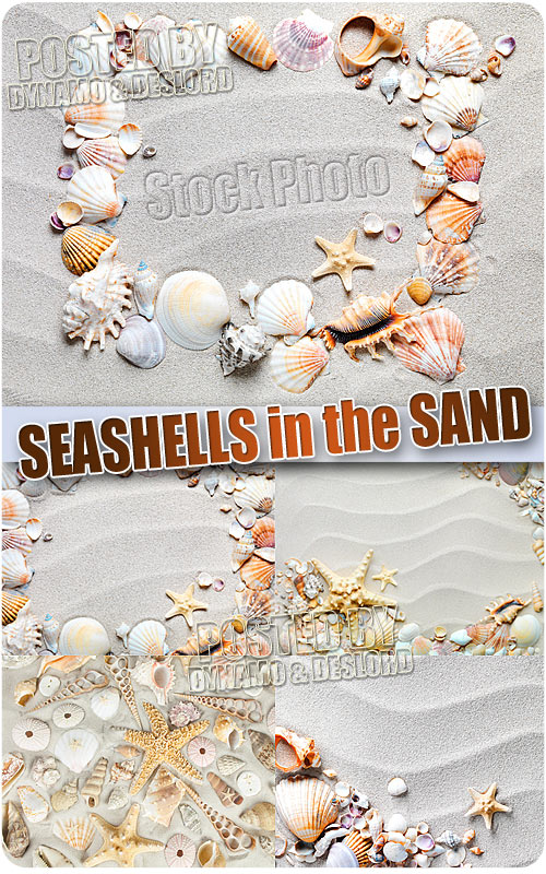 Seashells in the sand - UHQ Stock Photo