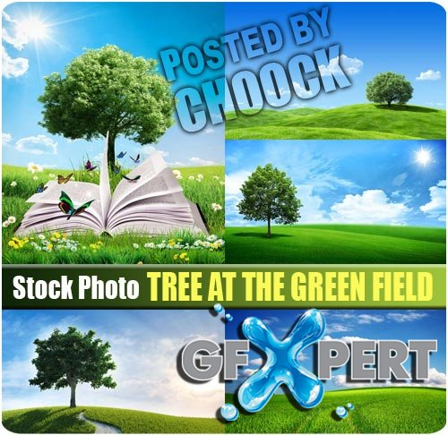 Tree at the green field - Stock Photo