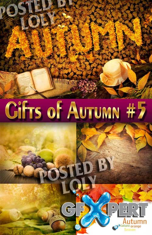 Gifts of Autumn #5 - Stock Photo