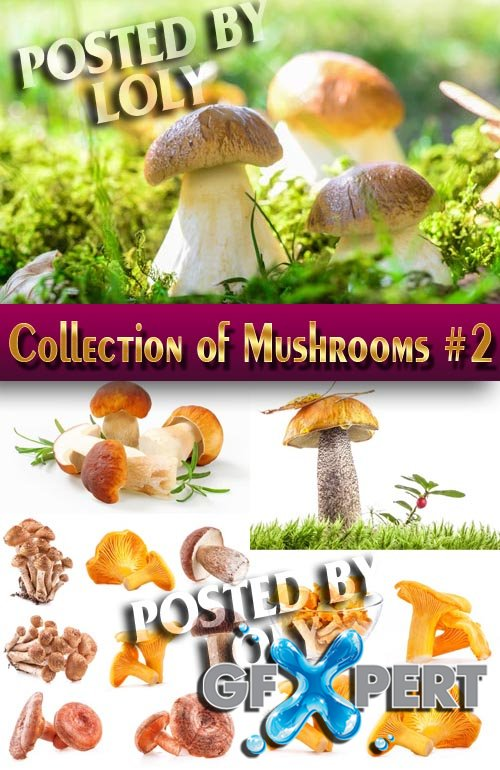 Food. Mega Collection. Mushrooms #2 - Stock Photo