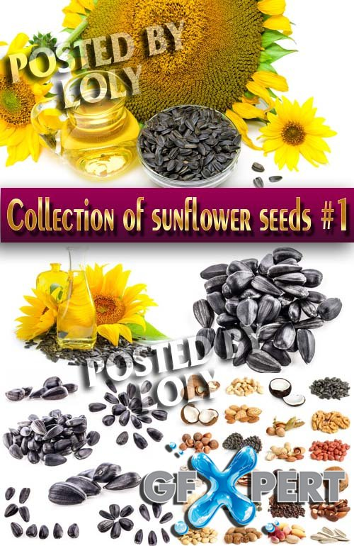 Food. Mega Collection. Sunflowers and sunflower seeds #1 - Stock Photo