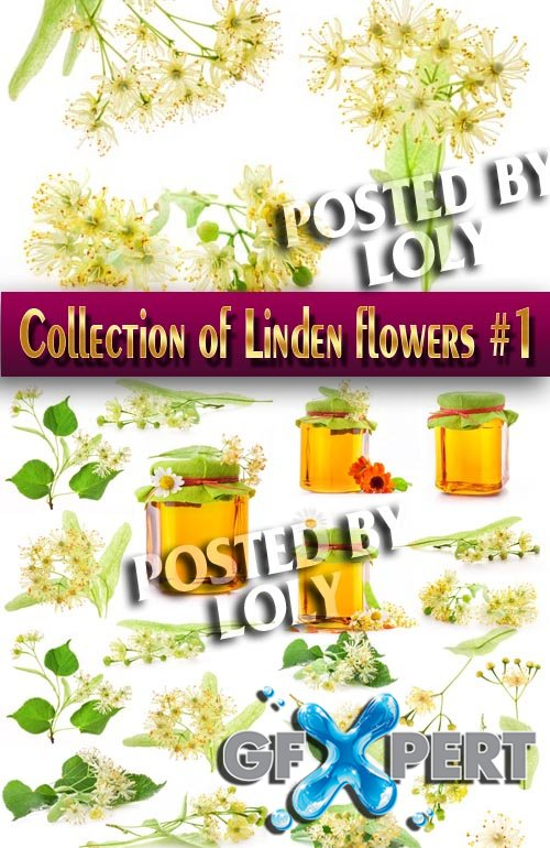 Food. Mega Collection. Honey and linden flowers #1 - Stock Photo