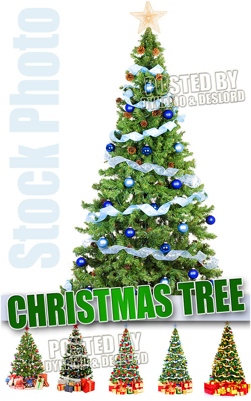 Xmas tree - UHQ Stock Photo