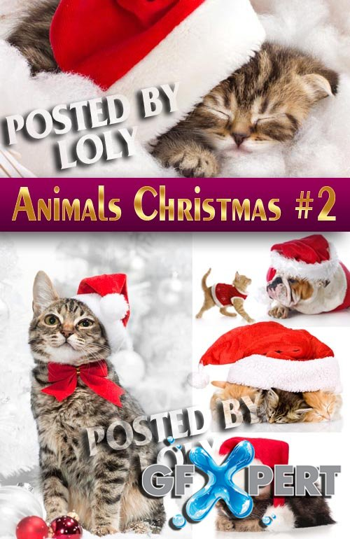 Xmas pet 2014 #2 - Stock Photo