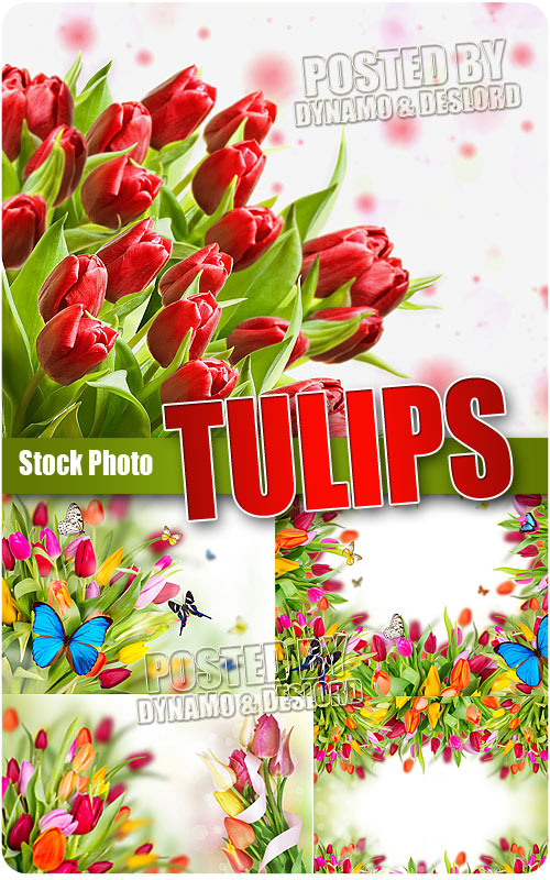 Tulips - UHQ Stock Photo