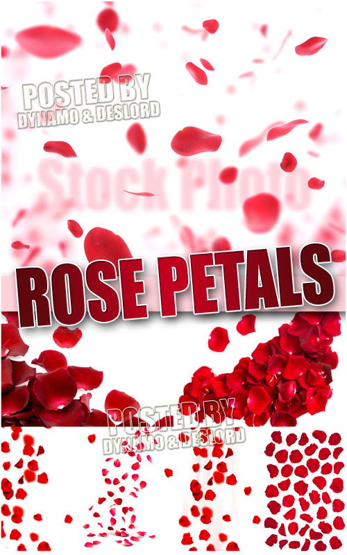 Rose petals - UHQ Stock Photo