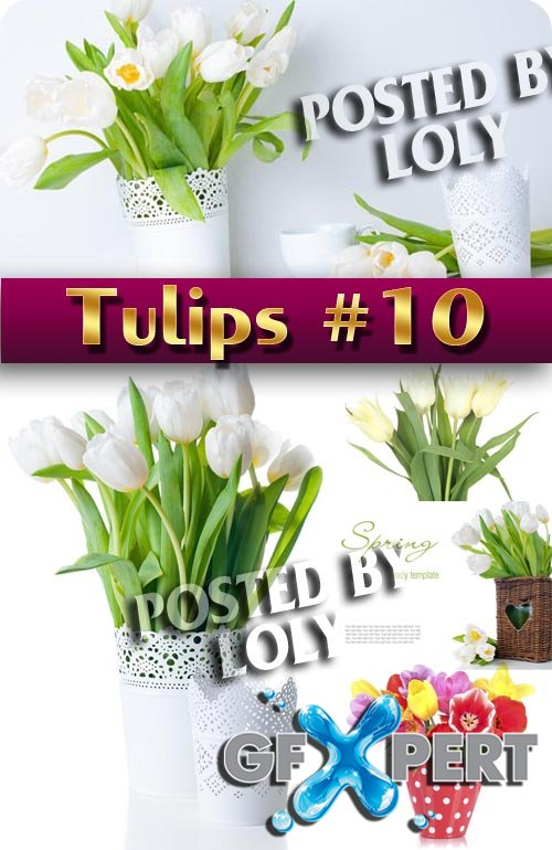 Flowers. Tulips #10 - Stock Photo