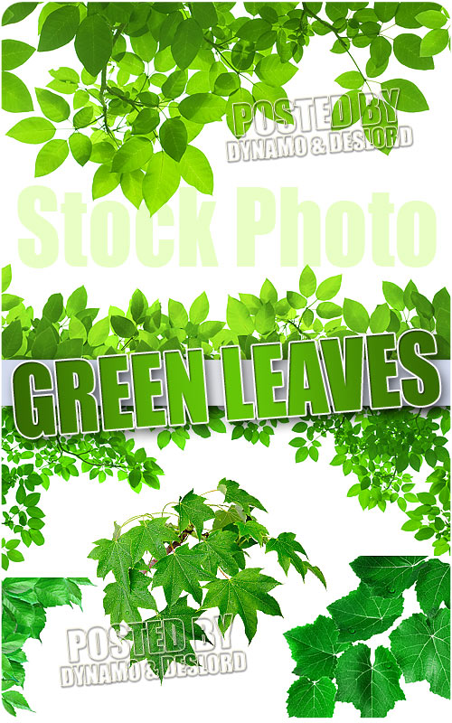 Green leaves - UHQ Stock Photo