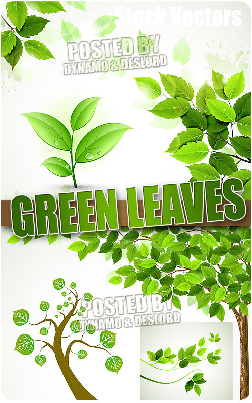Green leaves - Stock Vectors
