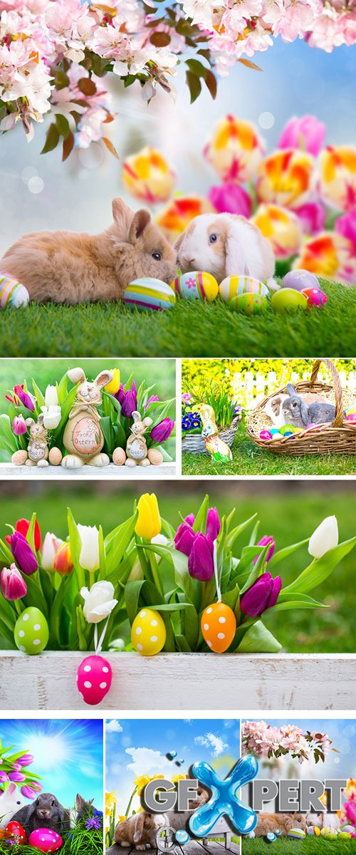 Stock Photo: Easter bunny in the grass