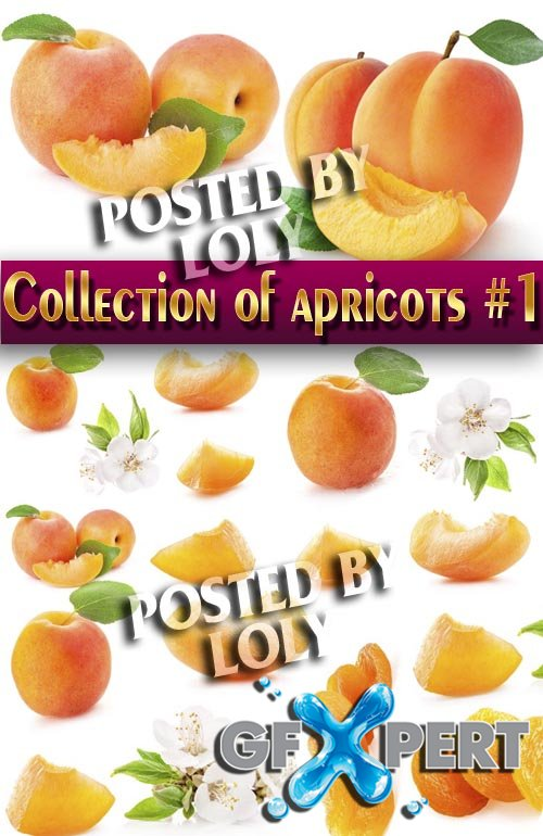 Food. Mega Collection. Apricots #1 - Stock Photo