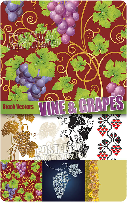 Vine and grapes - Stock Vectors