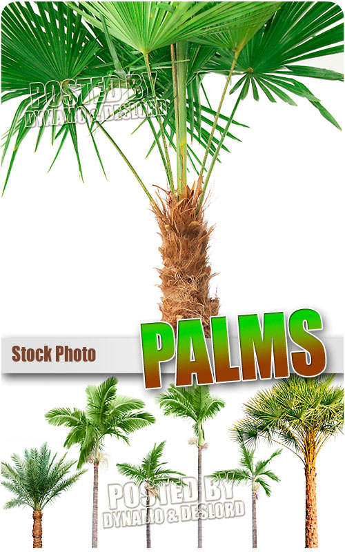 Palms - UHQ Stock Photo