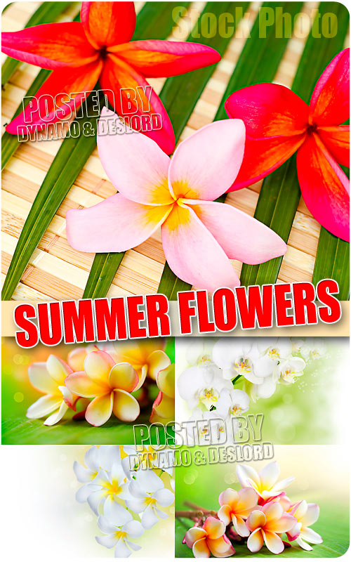Summer flowers - UHQ Stock Photo