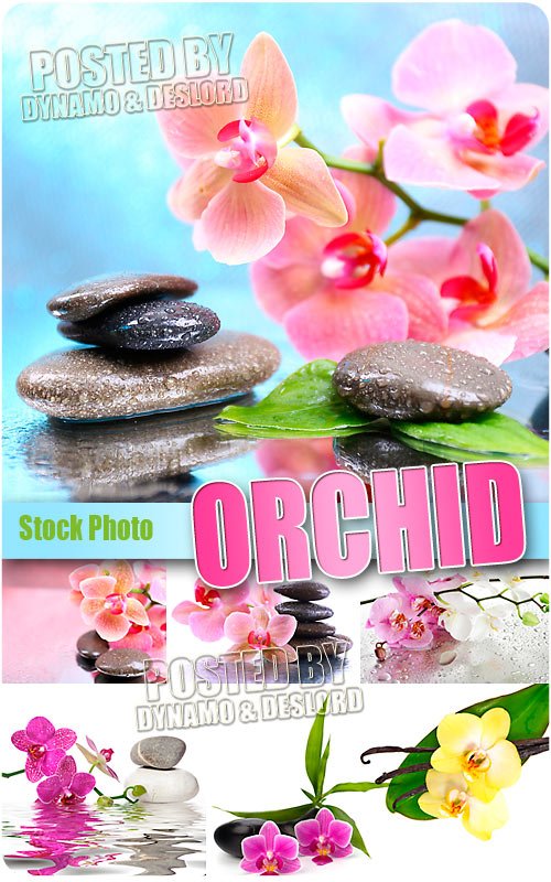 Orchid - UHQ Stock Photo
