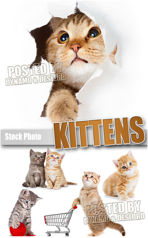 Kittens - UHQ Stock Photo