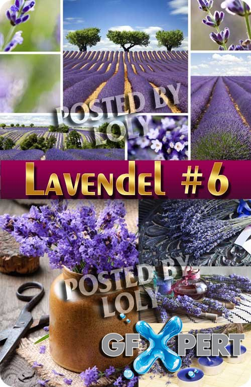 Lavender flowers #6 - Stock Photo