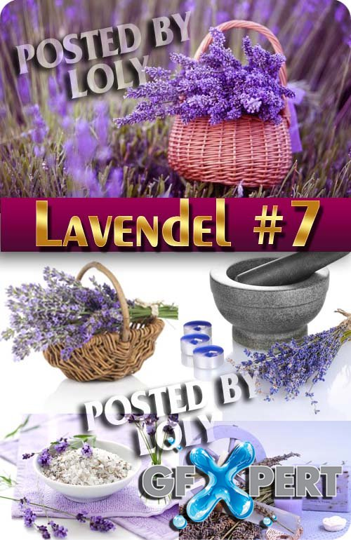Lavender flowers #7 - Stock Photo