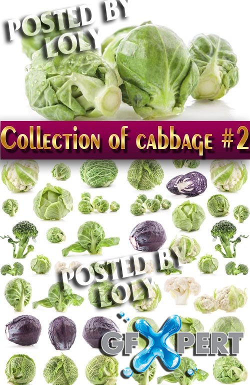 Food. Mega Collection. Cabbage #2 - Stock Photo