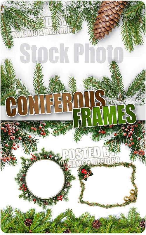 Coniferous Frames - UHQ Stock Photo