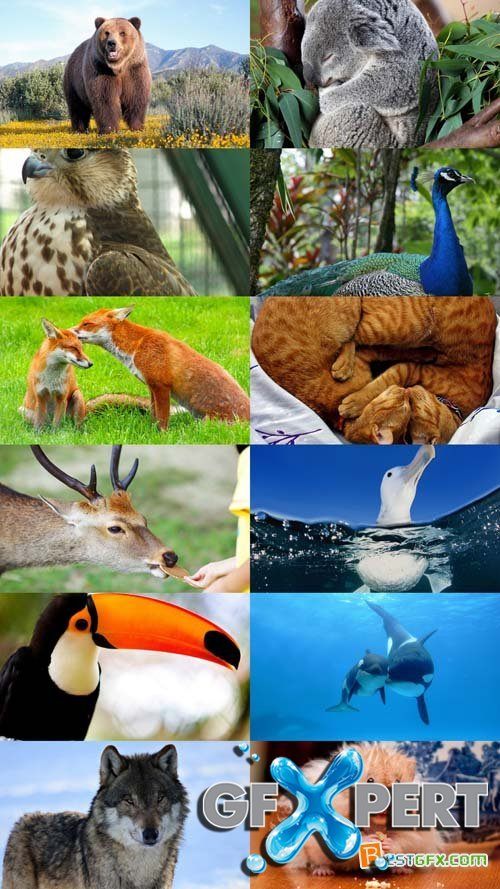 World of Beautiful Animals Wallpapers Set 50