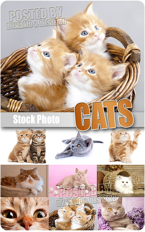 Cats - UHQ Stock Photo