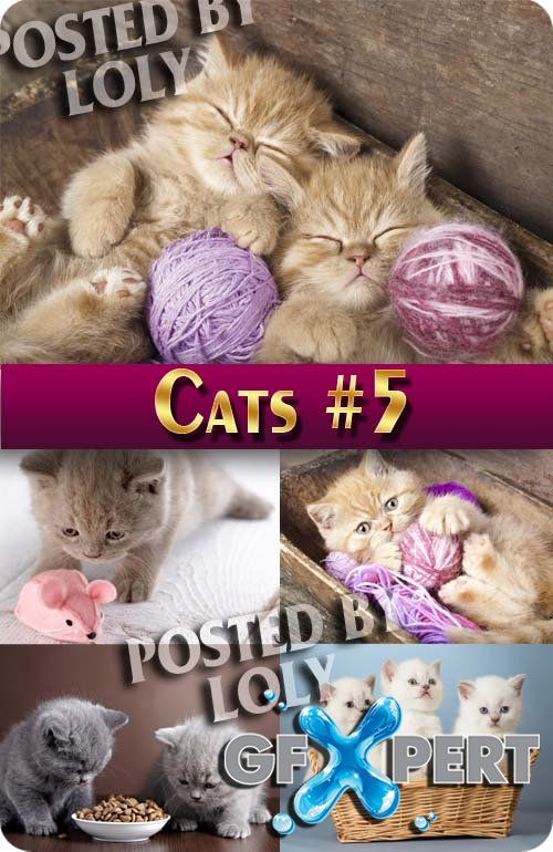 Wonderful kittens #5 - Stock Photo