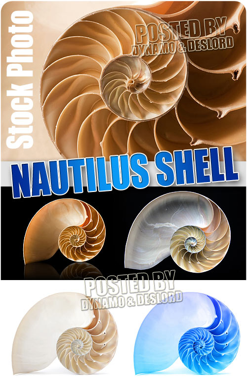 Nautilus shell - UHQ Stock Photo