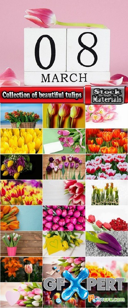 Collection of beautiful tulips 25 HQ Jpeg