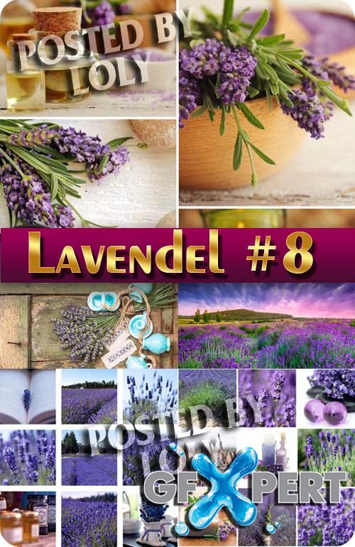 Lavender flowers #9 - Stock Photo