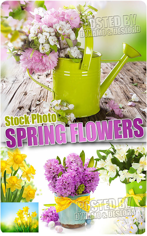 Spring Flowers 3 - UHQ Stock Photo