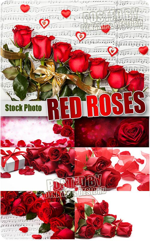 Red roses 2 - UHQ Stock Photo