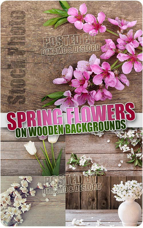 Spring Flowers on wood - UHQ Stock Photo