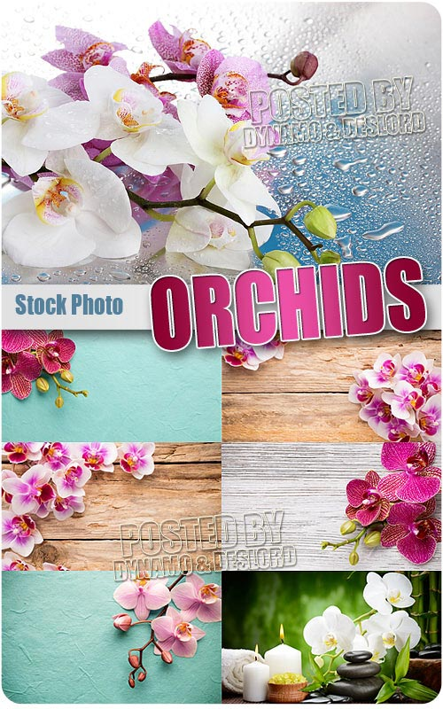 Orchid 2 - UHQ Stock Photo